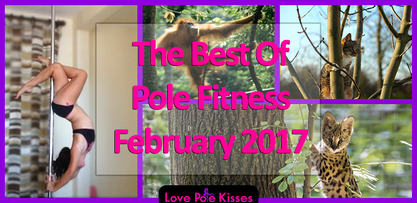 Best Of Pole Dance & Fitness February