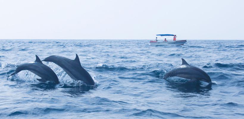 Sri Lanka Dolphins